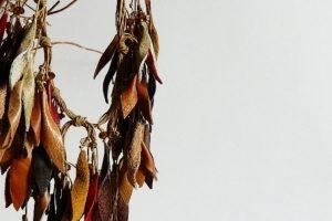 Робота Кольє з шкіри Гармонія осені