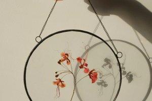 Робота Тропічний гербарій