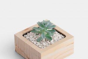 Робота Дерев`яний вазон для кактусів чи сукулентів