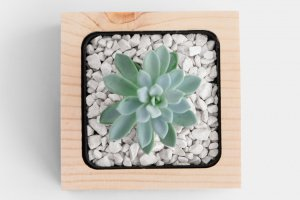 Дерев`яний вазон для кактусів чи сукулентів - Опис